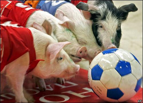 Звериный спорт: азартные издевательства над животными