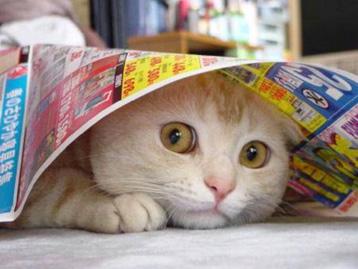 10 интересных фактов про кошек