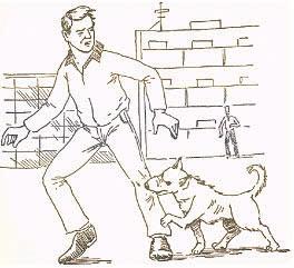 На Вас напала собака. Что делать?