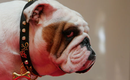 Собачий ошейник за £500,000