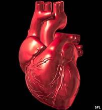 На сердце нарастили новую мышцу