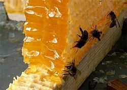 А что вы знаете о пчелином меде?