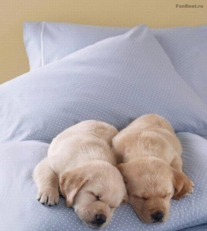Тихо! Тут все спят...