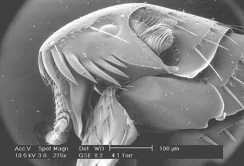 Монстры под микроскопом