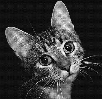 Афоризмы про котов