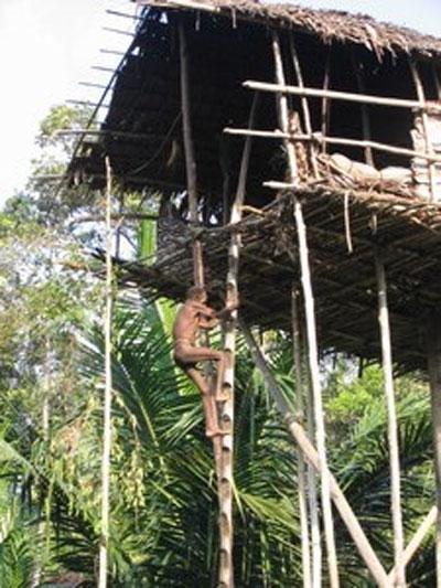 Самые удивительное жилье на деревьях