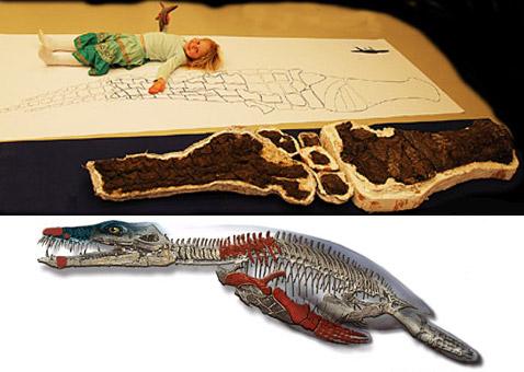 На Шпицбергене найдены новые кости морского монстра