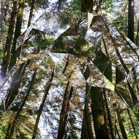Зеркальная дыра в лесу