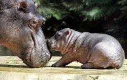 10 самых причудливых животных мира