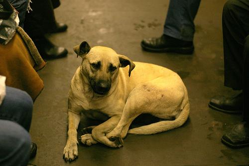 В Кирове убьют 14 тонн собак