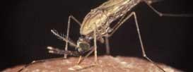 Добровольцам заплатят по 4000 долларов за заражение малярией