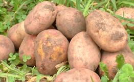 ООН объявила фотоконкурс, посвященный картофелю