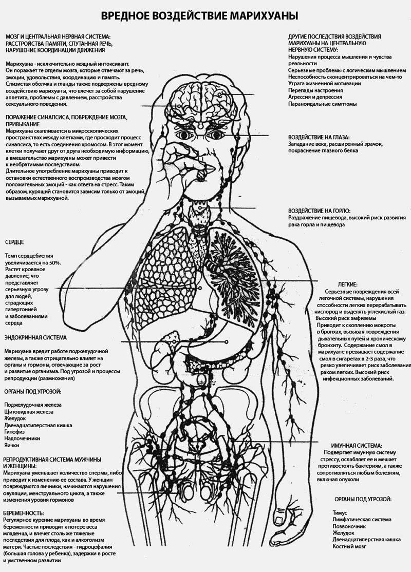 Вред марихуаны для здоровья марихуана что она делает