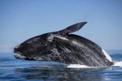 О дельфинах и китах