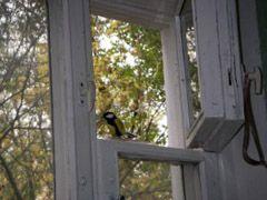 Что могут вынести через форточку вашей квартиры