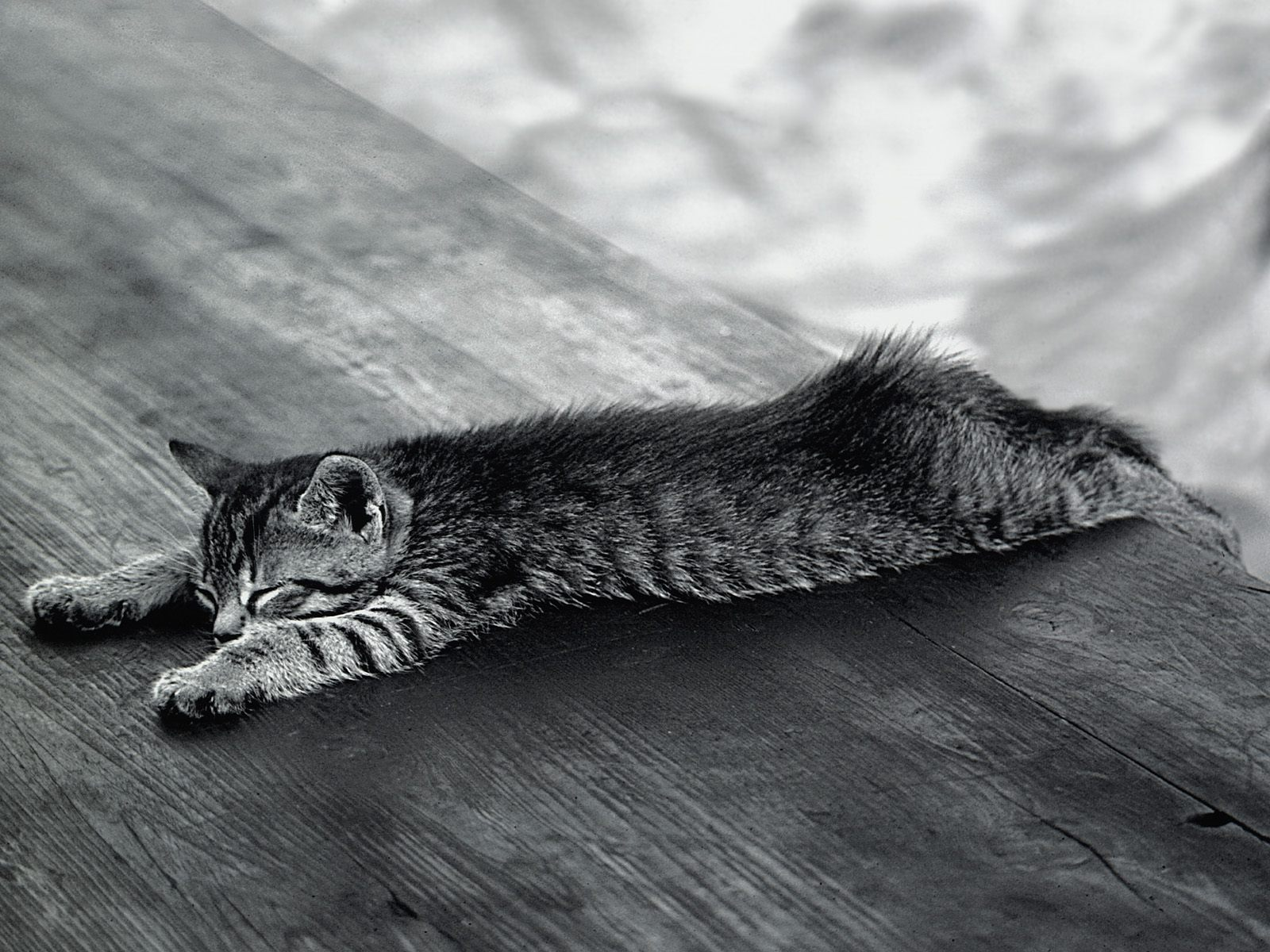 антик коты валяющиеся пластом картинки очень необычная внешне