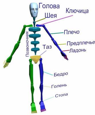 Названы самые «бесполезные» части человеческого тела