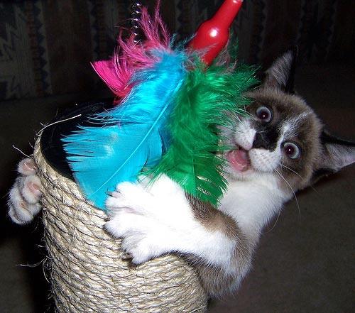 Забавные кошки