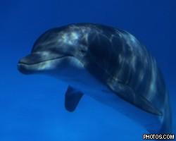 Пьяные британцы оштрафованы за приставание к дельфину