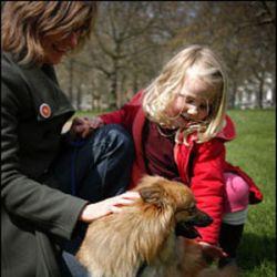 Собаки напрокат выдаются в США