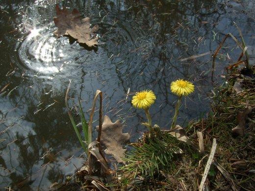 Весна (фото)
