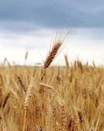 Почему цены на продукты питания растут?