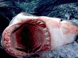 Акулы атакуют пляжи Турции