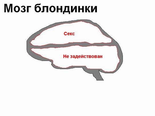Чем забит мозг  женщин,мужчин и блондинок??