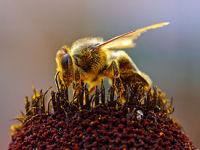 Где построен и процветает коммунизм? Иерархия пчел.