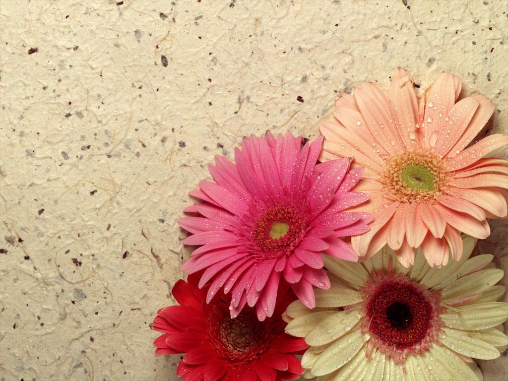 Картинки цветов с пожеланиями 3