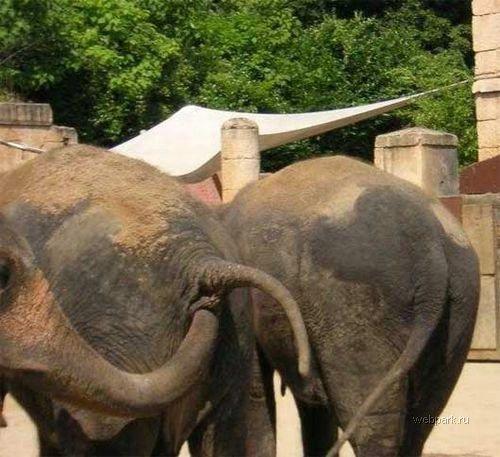 7 причин не ходить с детьми в зоопарк