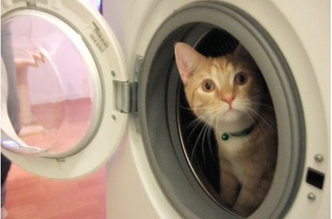 В Голландии кот выжил после получасовой стирки в машинке