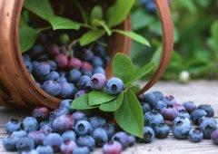 Чем полезны ворон-ягода и дурница?
