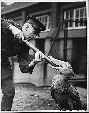 Лондонский зоопарк. Ретро