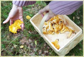 ГРИБЫ – ОБОРОТНИ. Съедобные грибы запросто могут стать несъедобными