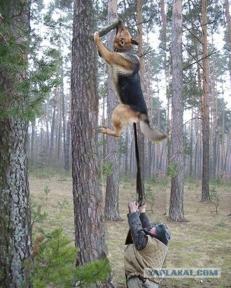 Фотожаба: Охотник и его верный пес