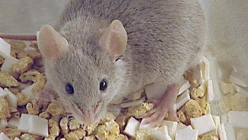 """Животные могут обмениваться химическими """"сигналами тревоги"""" - ученые"""