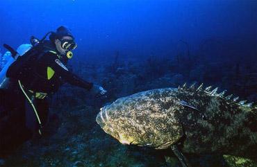 Обнаружен новый вид 450-килограммовых океанских рыб
