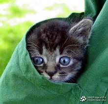 Семь кошачьих вероломств
