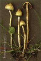 Спиритизм и грибы