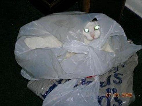 Коты уходят в отрыв