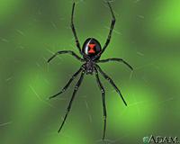 Почему паучихи едят пауков