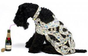 Осенне-зимнюю коллекцию одежды для собак украсили бриллиантами