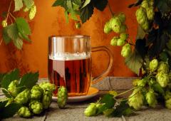 В чём «неполезность» пива?