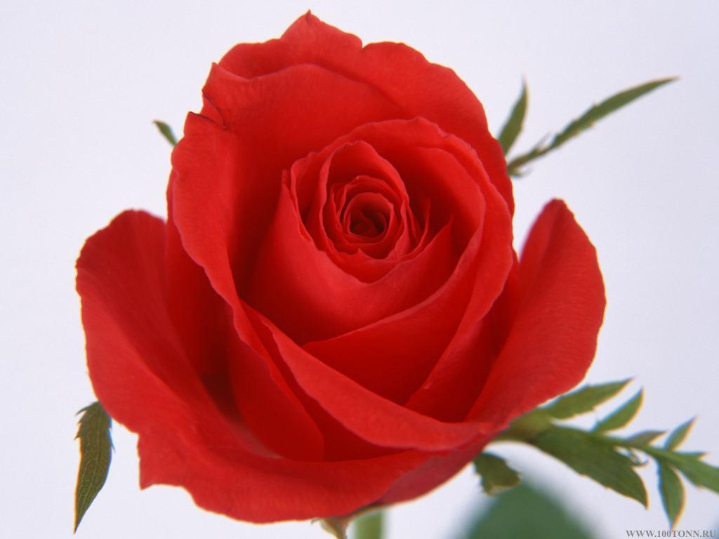 Цветок картинка 7