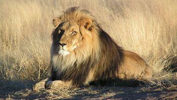 Каждый четвертый вид млекопитающих находится на грани исчезновения