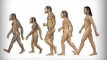 Эволюция человека остановилась - ученые