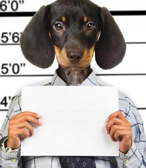 10 случаев когда животные привлекались к суду