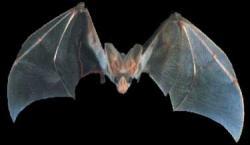 ТОП10 животных-призраков
