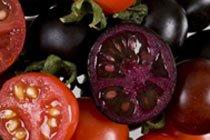 Генетики вывели противораковые фиолетовые помидоры